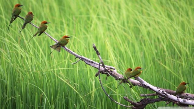 Birds HD Wallpaper