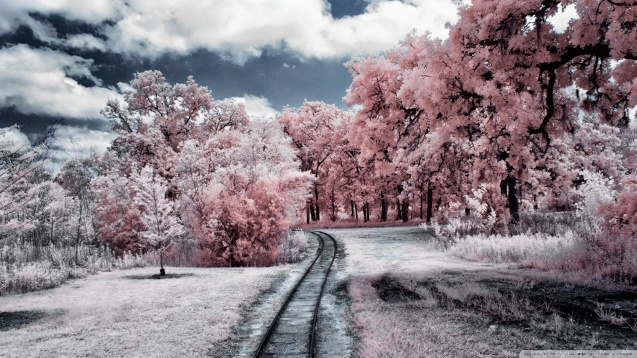 Through the Pink Woods Wallpaper