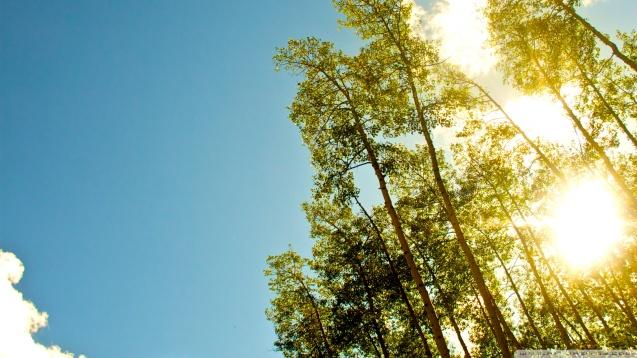 Under The Gold Sun HD Wallpaper