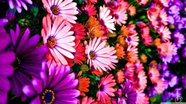Vibrance Flowers wallpaper